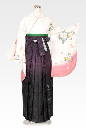 白地に菊に牡丹とムラサキぼかしスワロ桜地