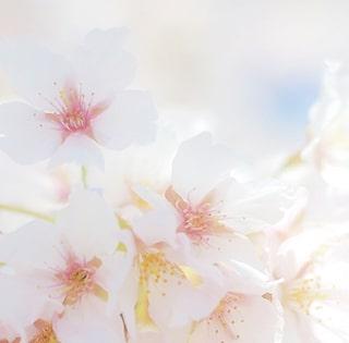 袴レンタルのイメージ画像